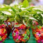 Как выращивать комнатные растения?