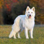 Как избавить собаку от паразитов?