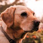Как подобрать средства от блох и клещей для собак?